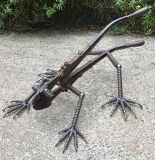 Iguana Front Side